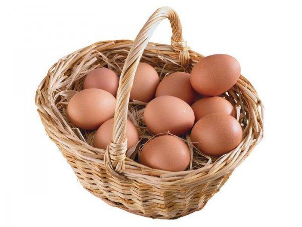 Пташенята здатні чути до того, як вилупиться з яйця